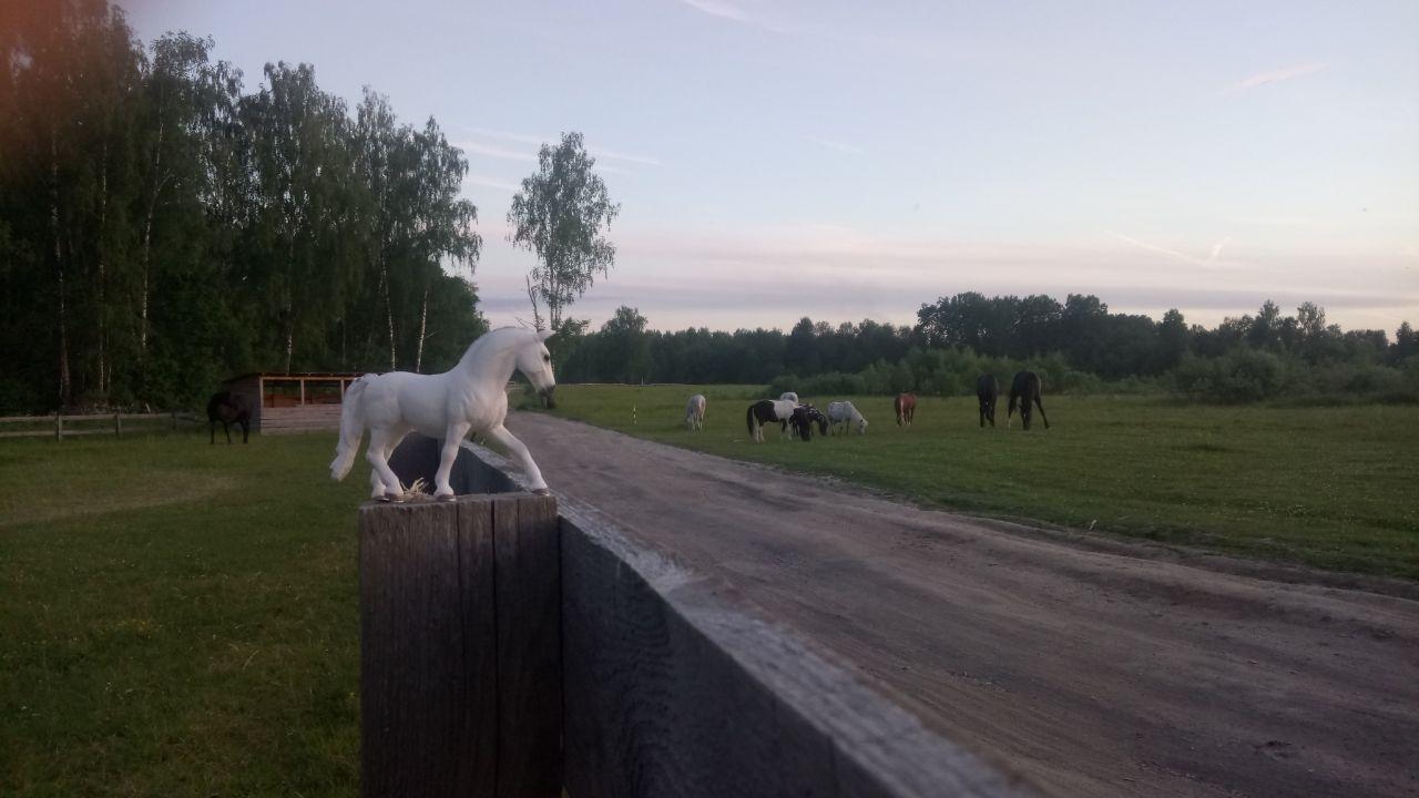 Шляйх лошади